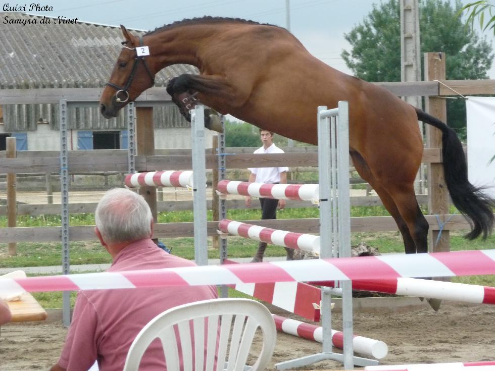 Un grand bravo à tous les eleveurs dont les poulains de nos étalons sont selectionnés pour les championnants de France elevage...