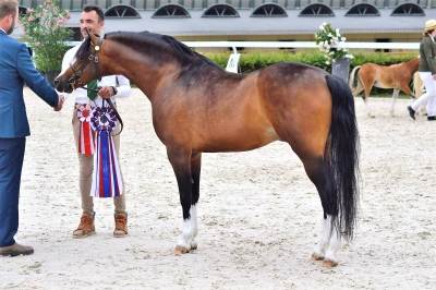 Janpete Touch of Class Champion Suprême National Welsh !!!
