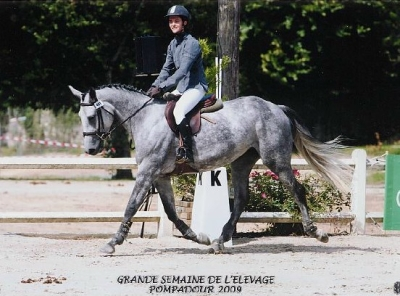 Félicitations à Roxie Diam et sa cavaliere Gaelle T'Kinit de Roodenbeke