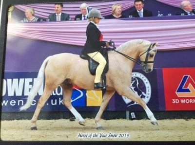 CADLANVALLEY SANDPIPER par EYARTH TROY vainqueur de le prestigieux concours HOYS (Horse of the Year Show). Bravo!!!