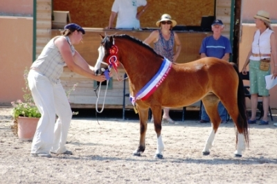 Sologn'Pony... Castlemead Delight...CHAMPIONNE SUPREME welsh!!!!!