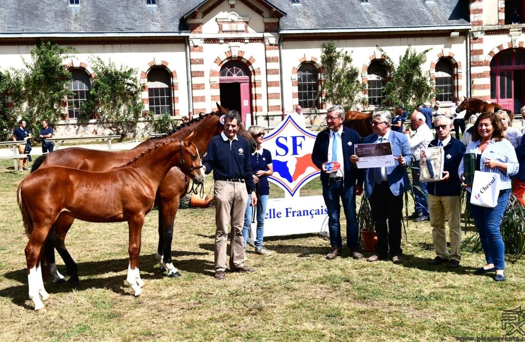 Ilyssa Blue Diam ( Nectar des Forêts/ Helios de la Cour) 2eme Femelle Agée Championnat de France Foals Selle Français