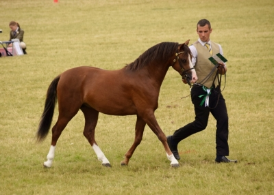 Exclusive Diam Vice- Champion Royal Welsh Show !!!