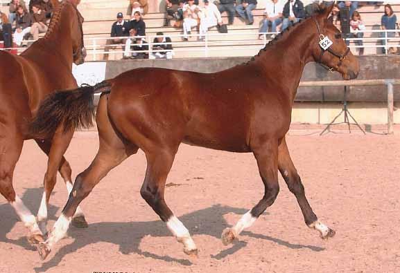 Truly Diam 1ere Concours Regional Foal- Championnat de France