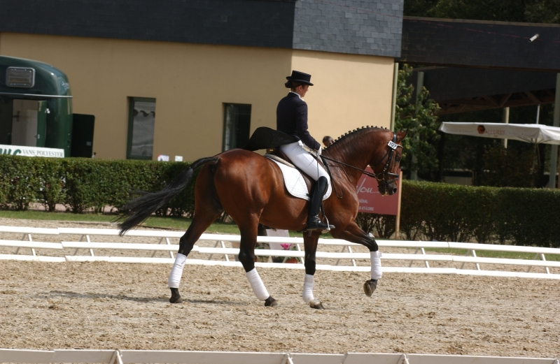 Quack Label Plus Dressage