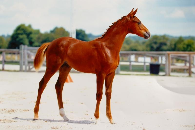 amour de vougon champion foal AACR