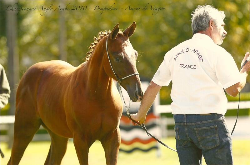 Amour de Vougon champion de France male foal AACR