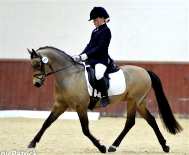 Chaconne par Eyarth Troy, grand gagnant dressage