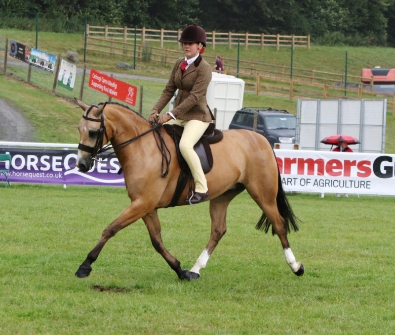 Puddingwood Dun to a Tee par Eyarth Troy Supreme Champion RWAS