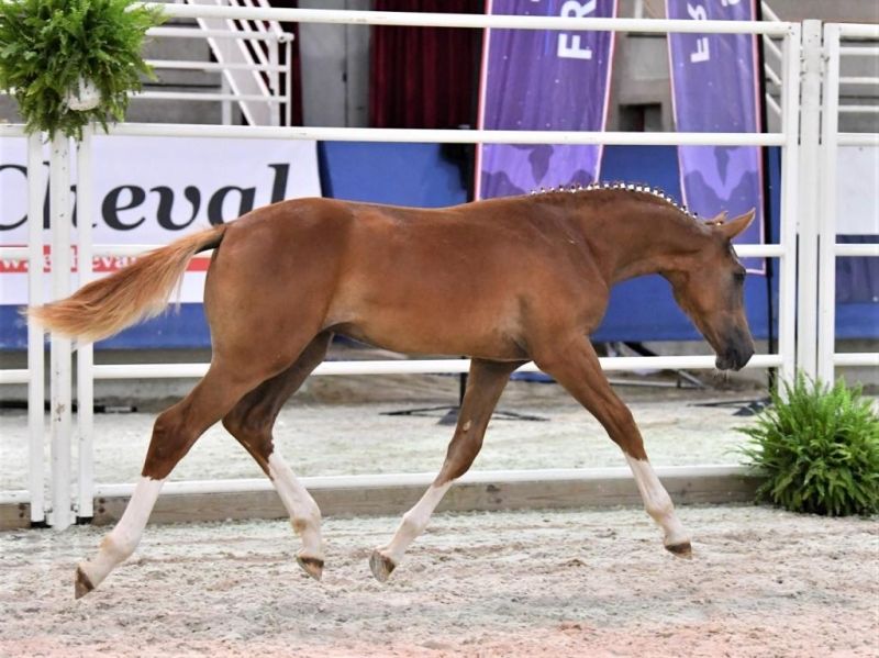 <b>Kourane de Bresneau  Vice Champion de France</b>