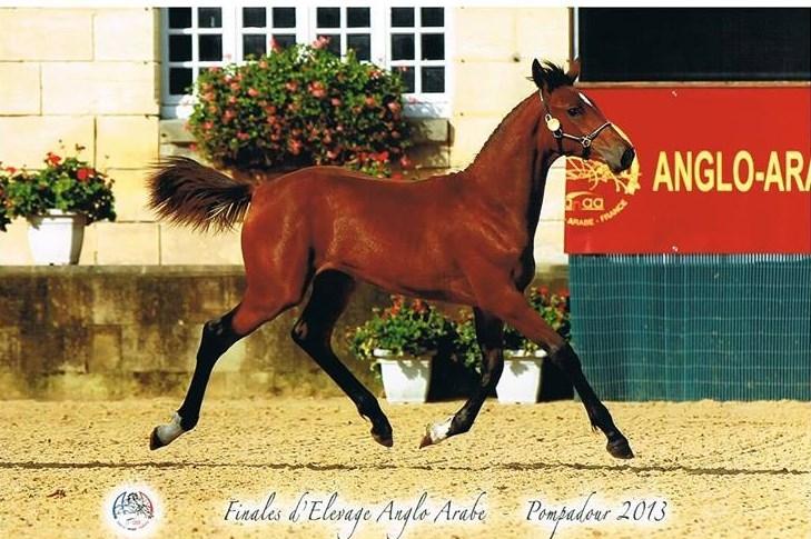 Delice de Nyrinag Vice Championne de France